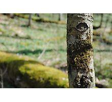 Gatlinburg Tree Photographic Print