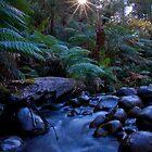 Badger Creek 1 by Daniel Berends