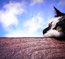 Cat daydreaming on top of a shed by jrsisson