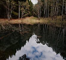 Forest Reflections by Malcolm Katon