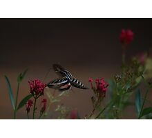 Moth with flowers Photographic Print