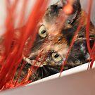Mia the naughty cat by lmcp 27