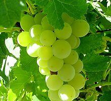Grapes by Ana Belaj