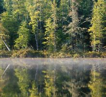 Pine Reflections by April Koehler