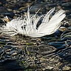 LIGHT AS A FEATHER by Sandy Stewart