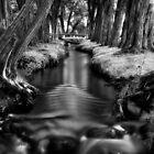 Quiet Afternoon by Jeffrey  Sinnock