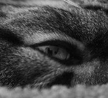 Eye by thinkhmm