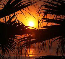 Palm Tree Sunset by Jonelle Davila