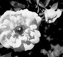 Flower Shadows by James2001