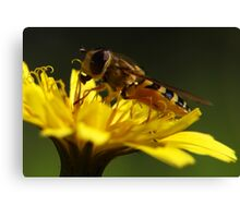 Hungry bee Canvas Print