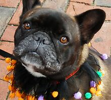 Pug in Halloween Mood !! by AnnDixon