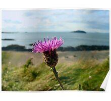 O Flower of Scotland Poster