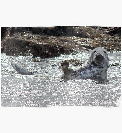 Grey Seal Waving Poster