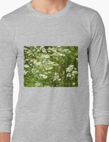 Herbs on the lawn - small white camomile flowers Long Sleeve T-Shirt