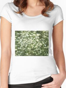 Herbs on the lawn - camomile flowers Women's Fitted Scoop T-Shirt