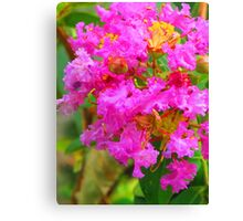 Extreme coloured blossom Canvas Print