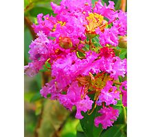 Extreme coloured blossom Photographic Print