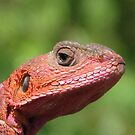 Elizardbeth by IslandImages