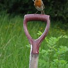 classic picture of a robin on a garden spade by michaelwallwork