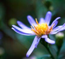 Blue Wild Flower Sticker