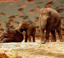 Evening Play by Carol Bleasdale