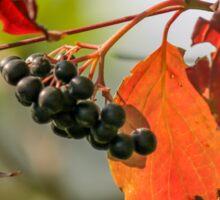 autumn berries Sticker