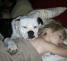 Furry American Bulldog
