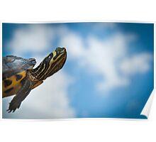 Turtle Dream Poster