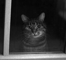Let me in please! by LisaRoberts