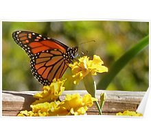 Monarch in the Marigolds Poster