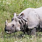 Greater One-horned Asian Rhinoceros by Kenneth Keifer