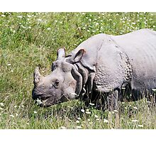 Greater One-horned Asian Rhinoceros Photographic Print