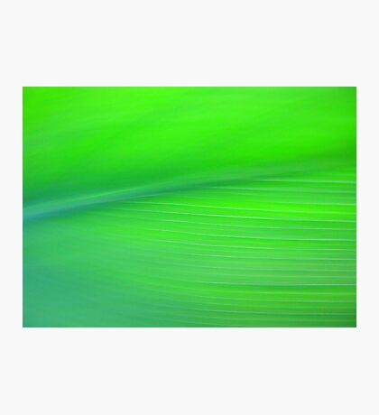 Pretty Green Photographic Print