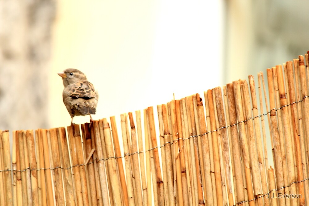 My Side Of The Fence! by J J  Everson