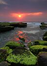 Weedy Sunrise Turimetta by Matt Penfold