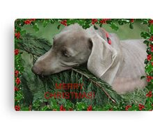 Merry Christmas Weimaramer Canvas Print
