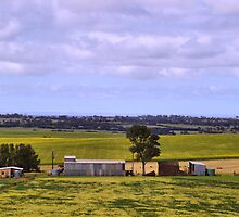 Canola Country by gypsygirl