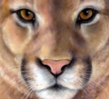 "Mountain Lion ""Raja"" Wild At Heart Series by Maureen Shelleau Sticker"