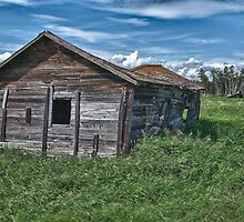 Alberta Cow Shed by JasPeRPhoto
