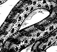 Anaconda Art Sticker