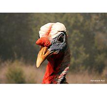 Twin Beaks... Photographic Print