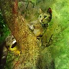 King of the (back yard) Jungle by enchantedImages