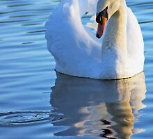 Swan on the Lake by David Alexander Elder