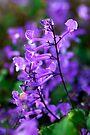 Purple Nirvana by Renee Hubbard Fine Art Photography