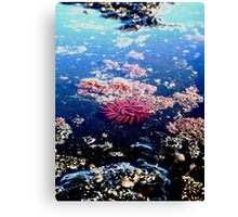 Little Red Sea Enemy 2 Canvas Print