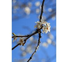 Winter Blossoms Photographic Print