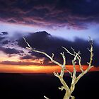Grand Canyon Snag at Sunset by Kenneth Keifer