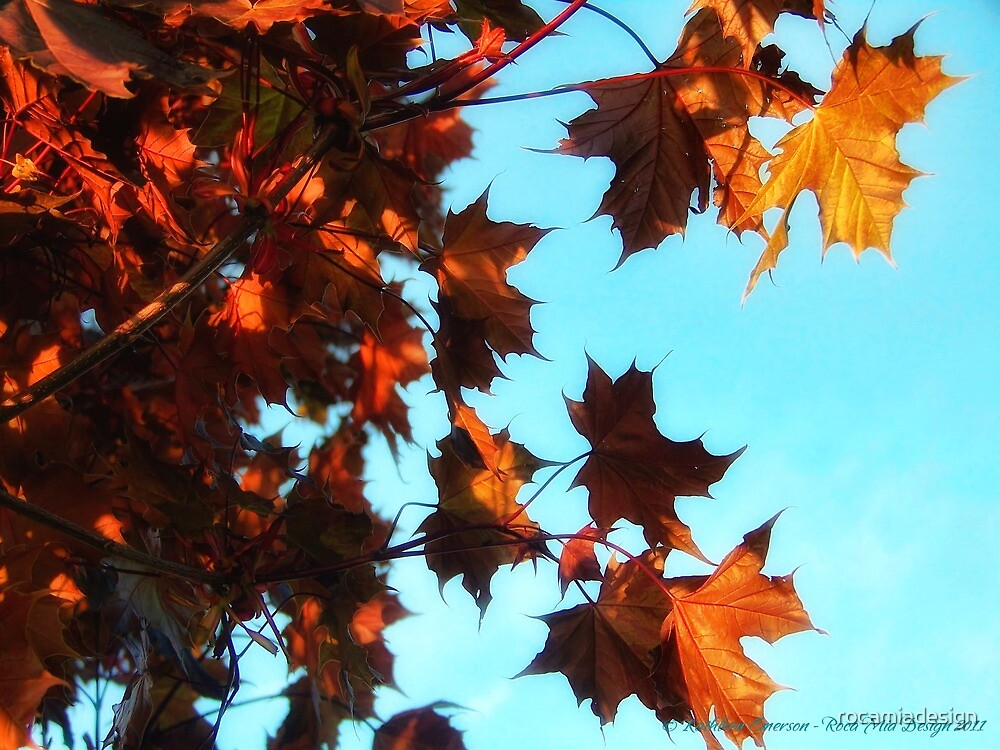 Red Maple by rocamiadesign