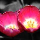 Pink by megandixon5
