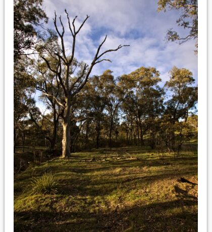 Aranda Bushland Nature Reserve (6) Sticker